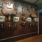 muzeul-de-arme-si-trofee-de-vanatoare-5-01