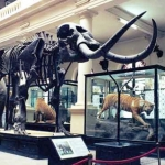 muzeul-de-istorie-naturala-grigore-antipa-bucuresti6