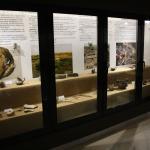 tezaur-arheologie-muzeul-dunarii-de-jos-calarasi-05
